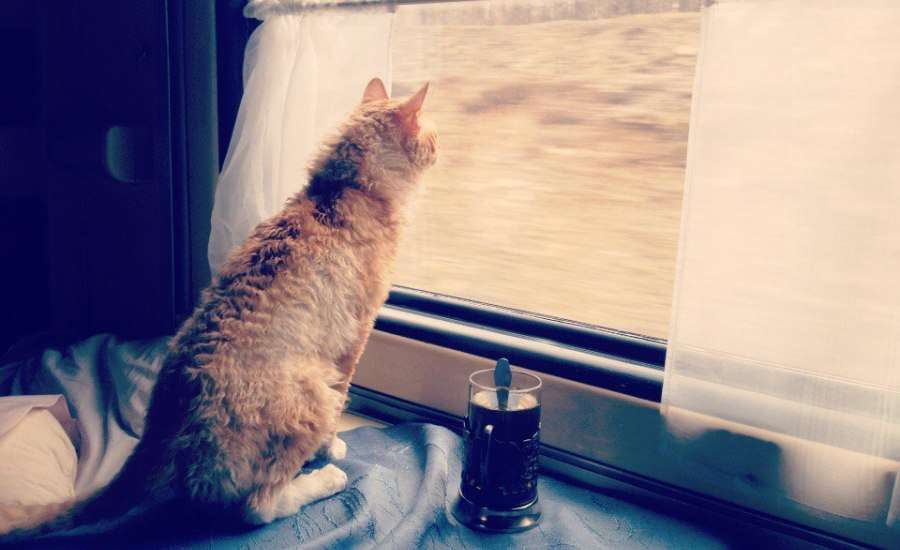 Why do Russians Travel by Train So Much? - Cat